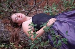 Спящая красавица полесья Стоковая Фотография RF