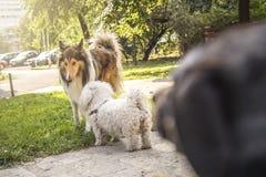 Сплетня щенка Стоковое фото RF