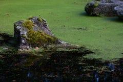 Сработанность воды и камней Стоковая Фотография RF