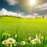 Сработанность стоцвета стоковое фото