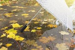 Сравните зонтик в парке осени на предпосылке желтых листвы и лужиц Стоковые Изображения RF