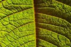 сравните листья Стоковая Фотография RF