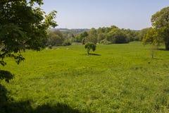 Сражение поля брани восточного Сассекс Hastings Стоковое Изображение RF