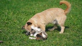 Сражение собаки и кота акции видеоматериалы