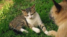 Сражение собаки и кота сток-видео