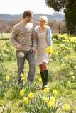 среди гулять весны daffodils пар романтичный стоковые фотографии rf