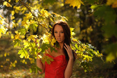 среди осени освещенная контржурным светом женщина листва Стоковое Изображение RF