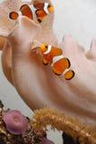 среди рифа clownfish Стоковая Фотография RF