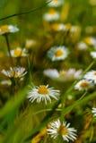 Среди Wildflowers стоковая фотография