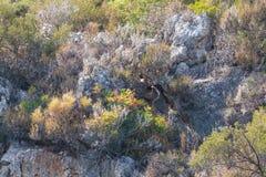 Среднеземноморская вегетация стоковое фото rf