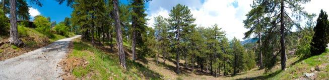 среднеземноморская живая природа панорамы горы Стоковое Фото