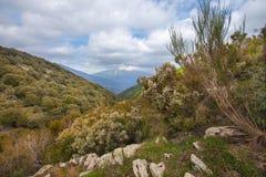 Среднеземноморская растительность плато гористой местности стоковые фото