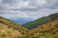 Среднеземноморская растительность плато гористой местности стоковые изображения