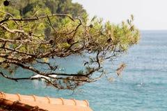 Среднеземноморские сосны стоковая фотография