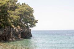 Среднеземноморские сосны стоковое фото rf