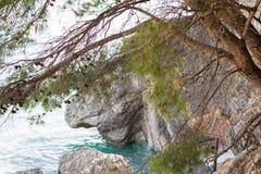 Среднеземноморские сосны стоковое изображение rf