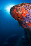 среднеземноморское sealife Стоковое Фото