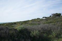 Среднеземноморской луг с сухими заводами стоковая фотография rf