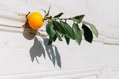 Среднеземноморской стиль Апельсин как украшение стоковая фотография