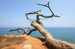 Среднеземноморск Стоковые Фото