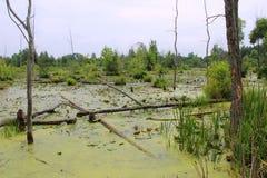 Среда обитания болота иллюстрация вектора