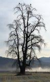 Среда обитания орла Стоковая Фотография RF