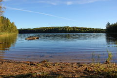 Среди леса озера Стоковые Фото