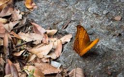 Среди листьев Стоковые Изображения