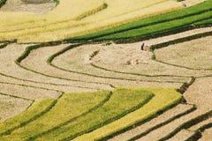 Среди кривых полей Стоковое Изображение