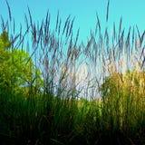 Среди тростников Стоковая Фотография RF