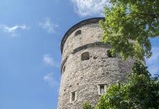 Средневековая башня в Таллине Стоковые Изображения