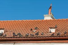 Средневековая крыша дома Стоковое Изображение