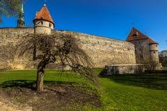 Средневековые стены в холме Toompea Talinn, Эстонии стоковые изображения rf
