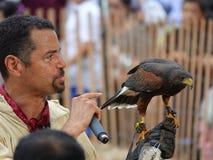 Средневековый соколиный охотник 21 фестиваля 2016 Стоковые Фотографии RF