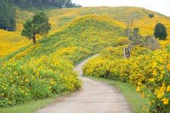 Среднее поле цветка дороги Стоковая Фотография RF