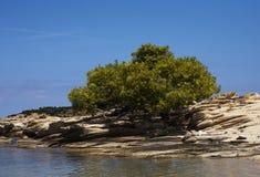 Среднеземноморская вегетация Стоковое Фото