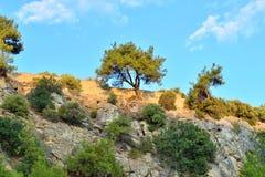 Среднеземноморская вегетация Стоковое Изображение RF