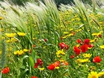 Среднеземноморская весна Стоковая Фотография
