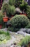 Среднеземноморские травы в баках Стоковые Изображения RF
