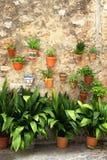 Среднеземноморские цветочные горшки на деревенской стене стоковая фотография