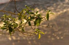 среднеземноморск Стоковые Фотографии RF