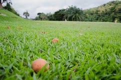 Средний гриб травы Стоковая Фотография