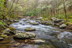 Средний Prong маленького реки, большие закоптелые горы Стоковое Фото