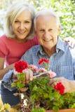 Средняя женщина и отец времени в саде Стоковые Фотографии RF