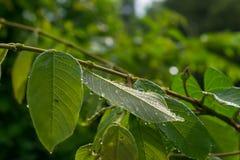 Средняя роса лес, Стоковая Фотография RF