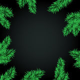 Средство темноты рамки ветвей ели Стоковое Изображение