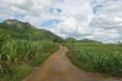 Средств сахарный тростник дороги гравия. Стоковая Фотография