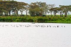 Стада птиц в кратере Ngorongoro, Serengeti Стоковое Изображение RF