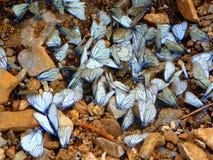Стадо бабочек на речном береге стоковые фото