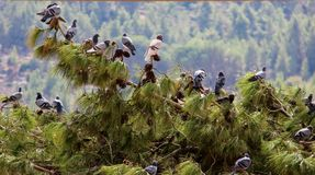 Стадо голубей стоит на дереве стоковые изображения